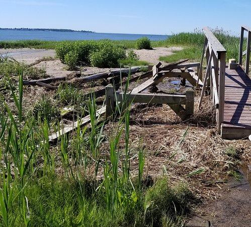 Long Wharf Nature Preserve