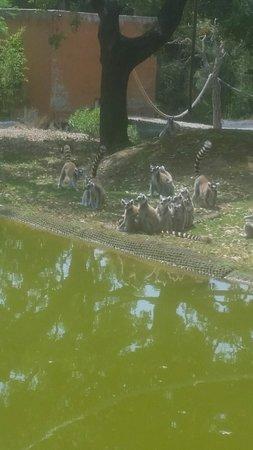 Foto de Badoca Safari Park