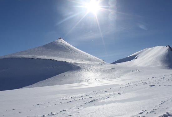 Green Dog Svalbard Photo