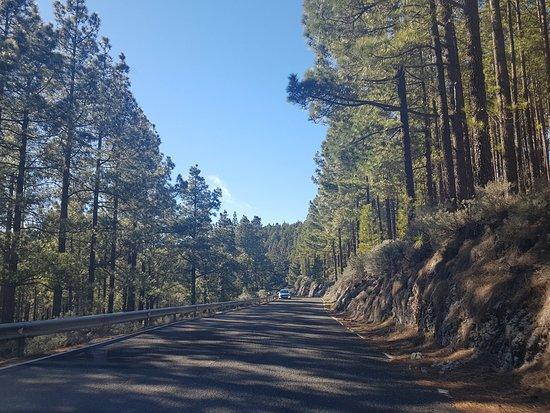 Pico de las Nieves: The roads near the top - such a far cry from the island near the beaches!