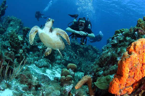 Occoquan, VA: Watching a beautiful green sea turtle while Diving Curacao's Mushroom Forest.