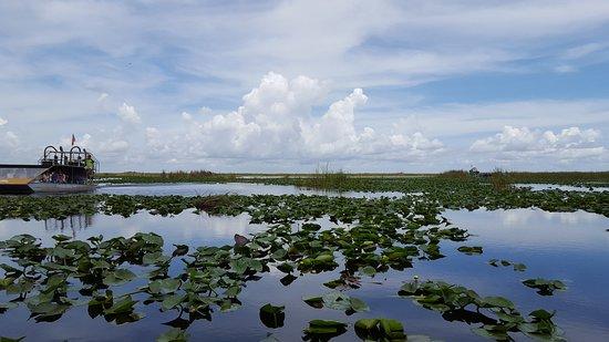 Everglades Airboat Tour & Gator Boys Alligator Rescue Show: airboat tour