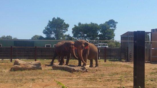 Safari Zoo: Some animals