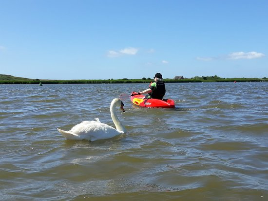 ShoreSports: Kayaking in Christchurch harbour