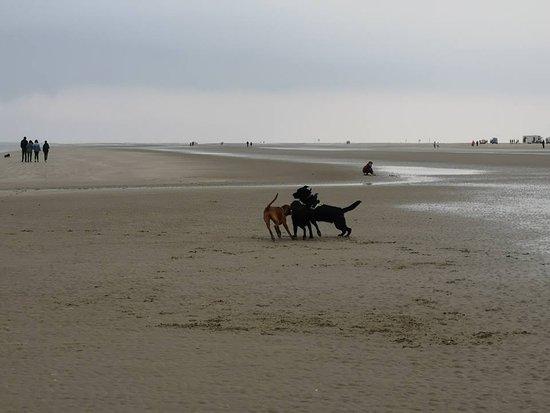 Jylland, Danmark: psí radovánky