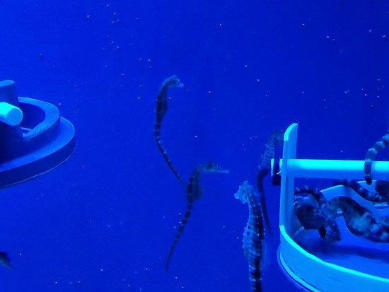 Aquarium of Genoa – fénykép