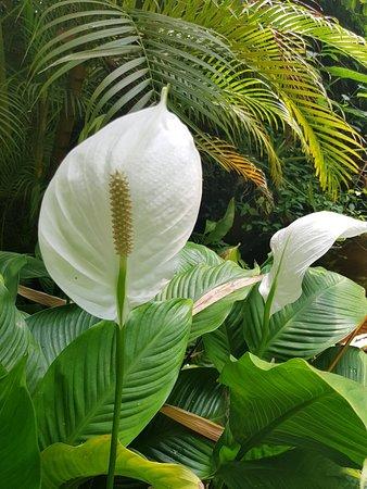 Valokuva: Hortus Botanicus