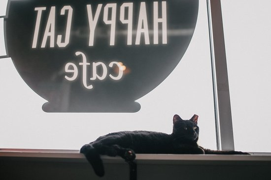 Happy Cat Cafe: Large windows for the cats and love to lounge in the sun!
