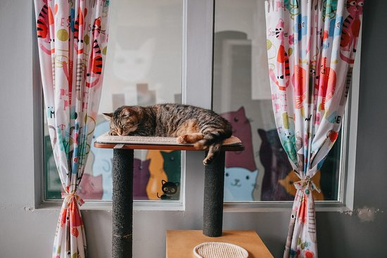 Happy Cat Cafe: GR's furrst cat cafe!