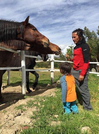 Yurac Yacu Café: Close encounters with on-site horses.