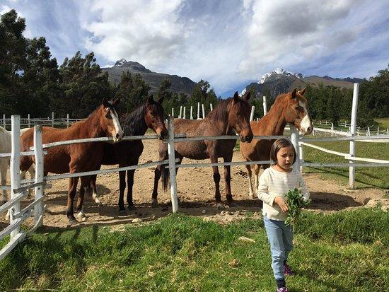 Yurac Yacu Café: Close encounters with on-site horses