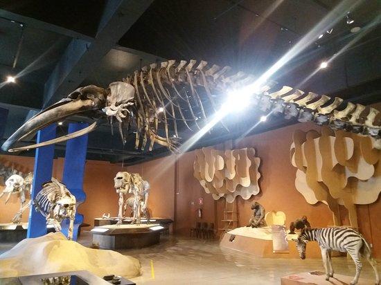 Natural Sciences Museum: Museu de Ciências Naturais