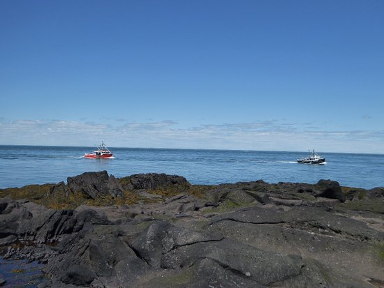 GAEL Tours: Lobster fishing boats on the Bay