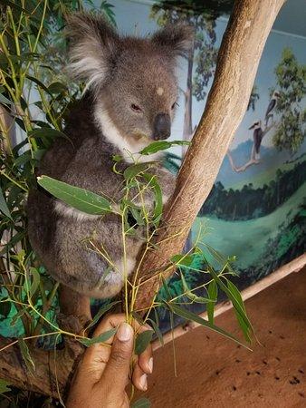 Grantville, Australia: 20180608_222753_large.jpg