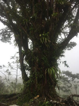 Arenal Lodge: Mystic Tree
