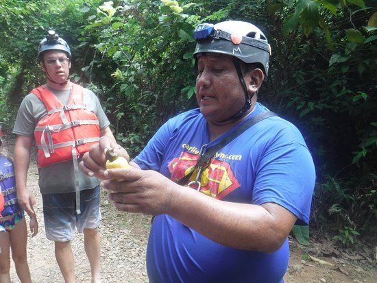 Charlie's Cave Tubing Tours: Charlie Chan explaining the Cashew plant to us in the forest