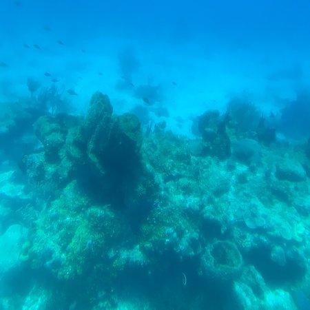 Фотография Atlantis Submarines