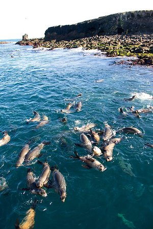 Phillip Island Whale Watching Tour: Seal Island
