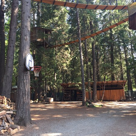 Out 'n' About Treehouse Treesort: photo1.jpg