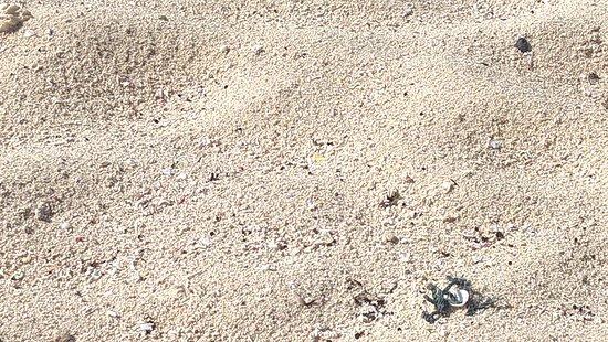 la arena de la playa de Paamul
