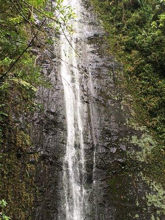 Nuuanu Valley Rain Forest Honolulu Updated 2019 All You