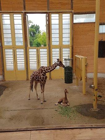 Фотография Роттердамский зоопаркBlijdorp