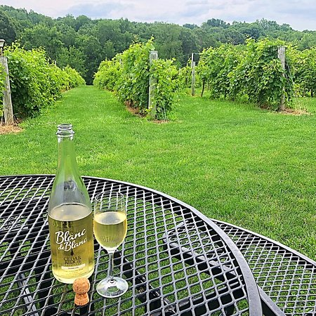 Swisher, IA: Blanc de Blanc | Vineyard