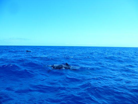 Hval og Dolphin Watching på Kanariøyene: Ein Pilot-Wal-Baby! Wie süß....! Was für ein Glück!