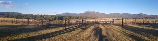 Mount Broke Wines & Restaurant: 20180624_155551_large.jpg