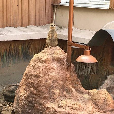 Bilde fra Nikolaev Zoo