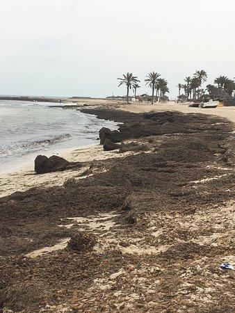 Hotel Djerba Castille: А это великолепный пляж(как написано в других отзывах)