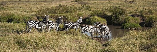 Tanzania Serengeti Adventure Ltd: ZEBRAS