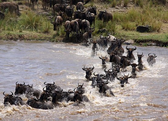 Tanzania Serengeti Adventure Ltd: MIGRATION