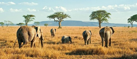 Tanzania Serengeti Adventure Ltd: elephant