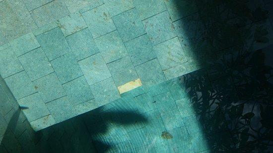 Ahimsa Beach Resort: Pool tile