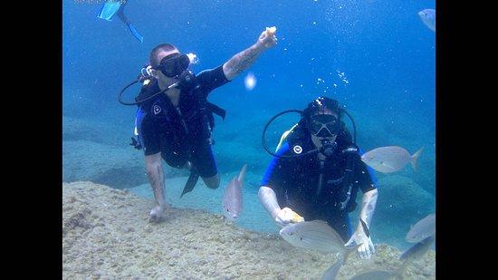 Rodos Diving Center: Feeding fish