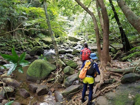 Iriomote Osanpo Kibun: Trekking to Pinaisara Waterfall.