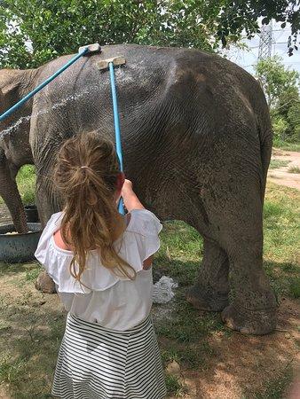 Wildlife Friends Foundation Thailand: Washing the elephant