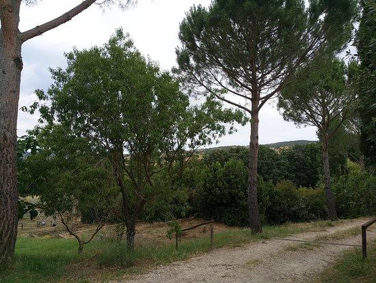 Azienda Agricola Camporegio: Foto 1