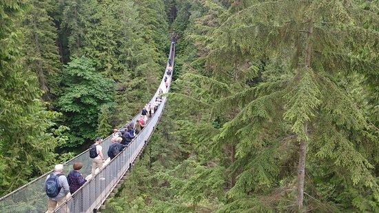 Подвесной мост и парк Капилано: ponte suspensa