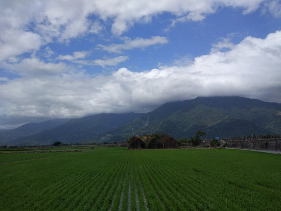Taitung Brown's Road: Spectacular paddy view with mountain backdrop