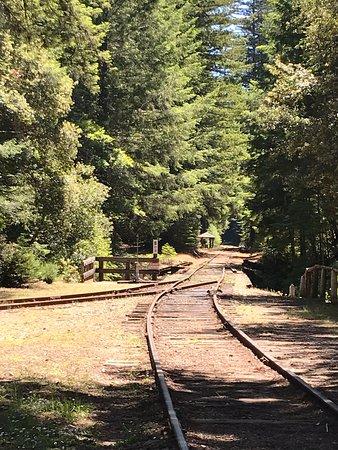 Skunk Train: Northspur Flyer fra Willits: Entering the forest