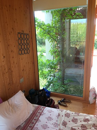 Carpeneto, Italie : A tree between the bathroom and the the room