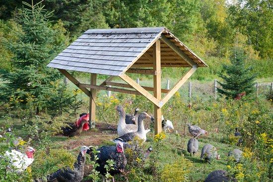 Baie-St-Paul, Kanada: Une ferme familiale avec plus que 1000 oiseaux !