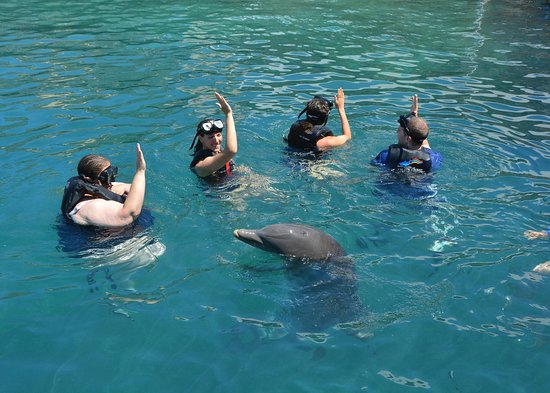 Dolphin Quest: Giving hand signals