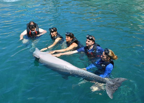 Dolphin Quest: petting dolphin