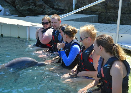 Dolphin Quest: meeting dolphin