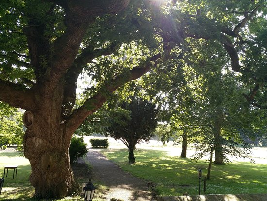 Hackness, UK: Oak tree in the beautiful grounds of the venue.