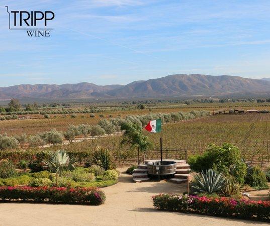 Valle de Guadalupe, Mexico: Tripp Wine.