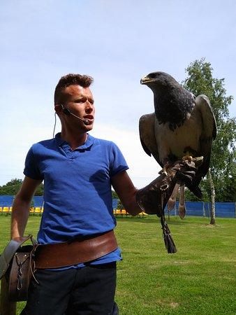 Le Bois des Aigles: Aigle bleu du Chili